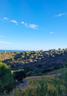 Randonnée dans le vignoble du Roussillon
