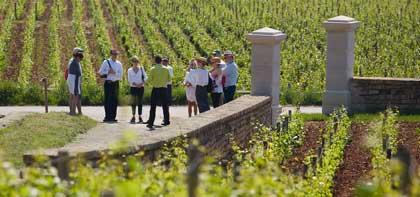 Séminaire entreprise dans les vignobles