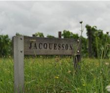 Domaine Jacquesson - Vignes