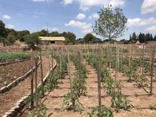 Vignoble bio en Provence