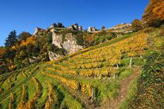 Vignoble du Jura - Château Chalon
