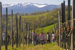 Visit jurancon hills