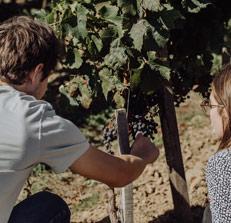 Visit wine estate near Paris