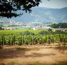 Brouilly vineyard in the Beaujolais region