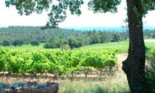 Week-end bio en Provence